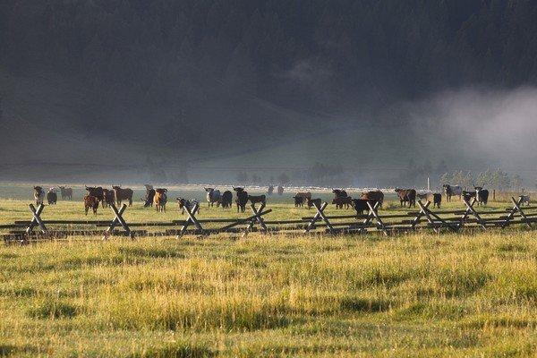 montana-dude-ranch