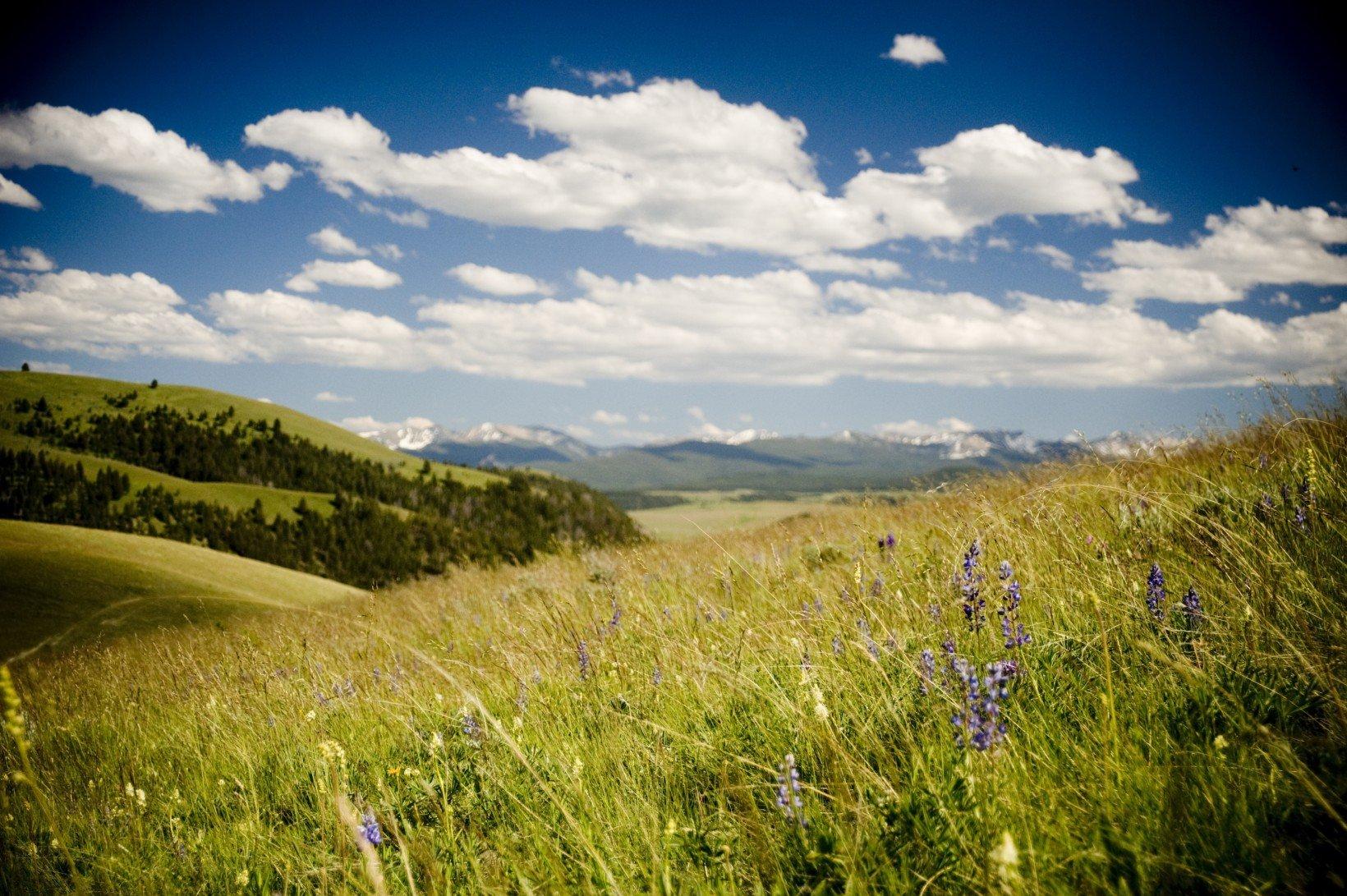 montana-wildflowers