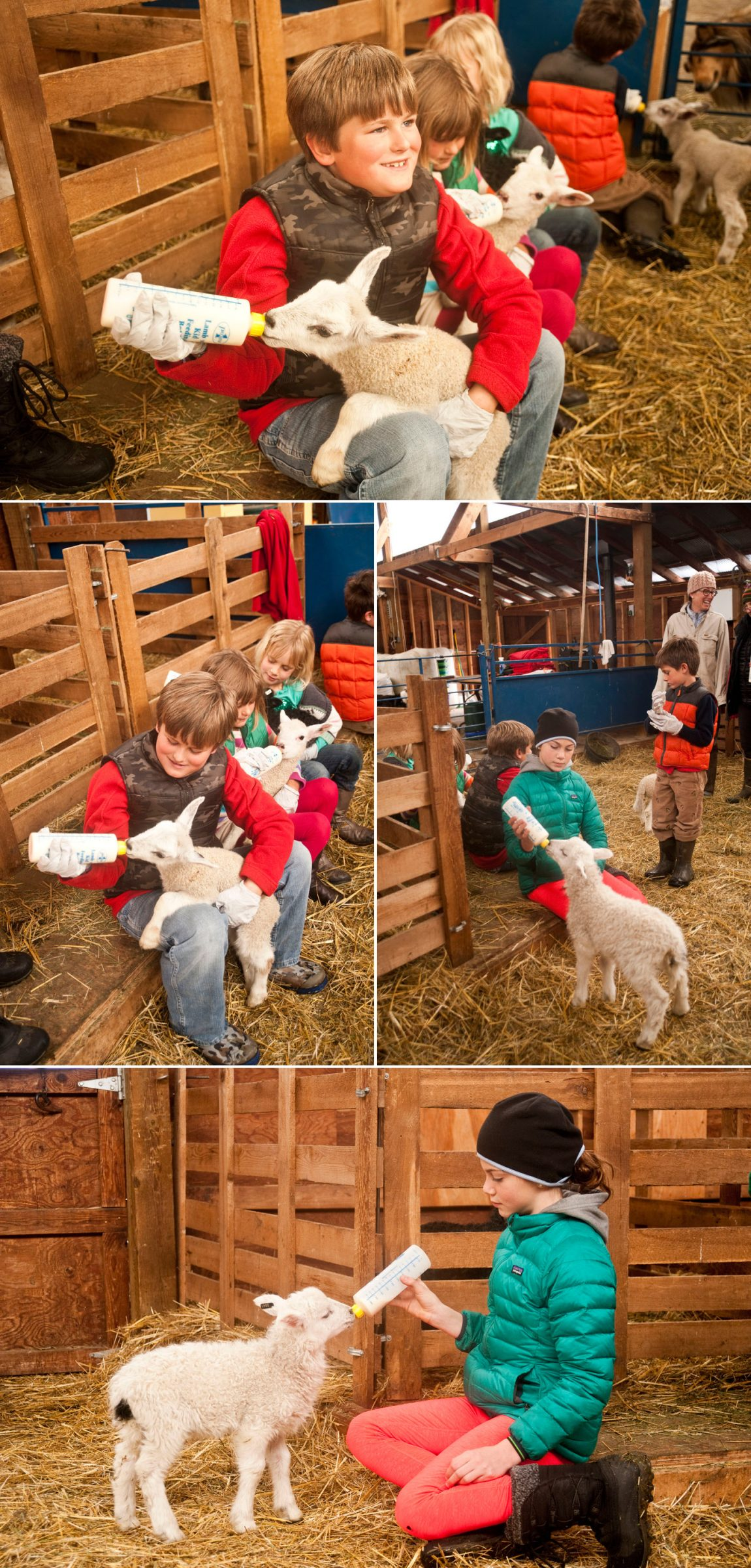 kids-feeding-lambs