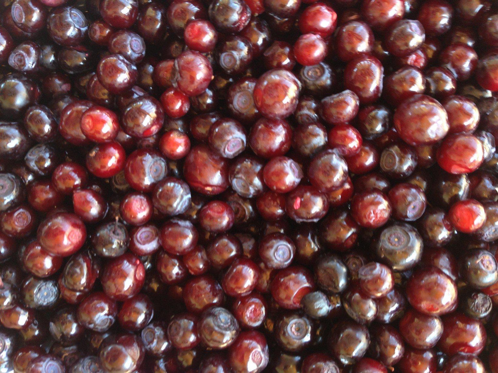 montana-huckleberries
