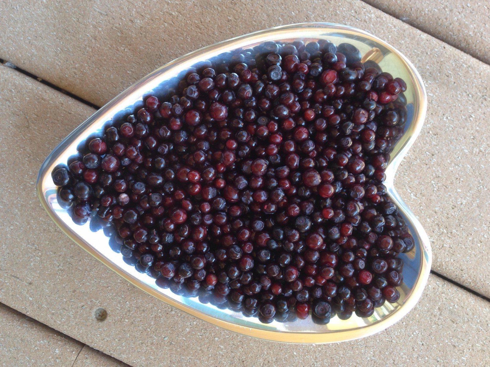 huckleberry-recipes