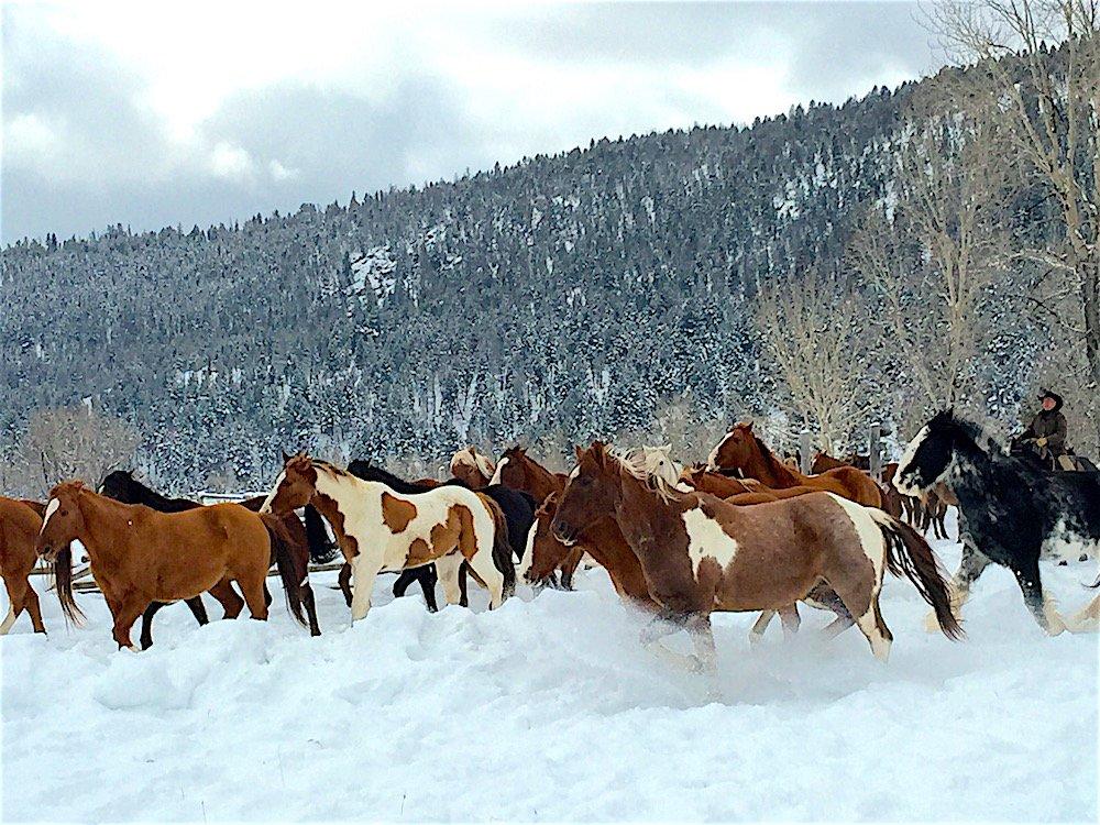 Jade Horses Running